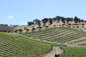 The vineyards of the Santa Ynez Valley