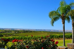 A View of the Mollydooker Vineyards in McLaren Vale, Australia
