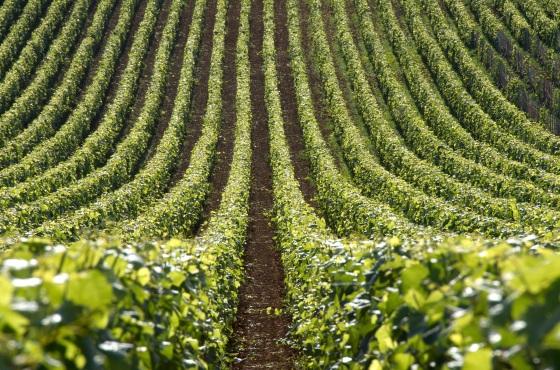burgundy-landscape_4